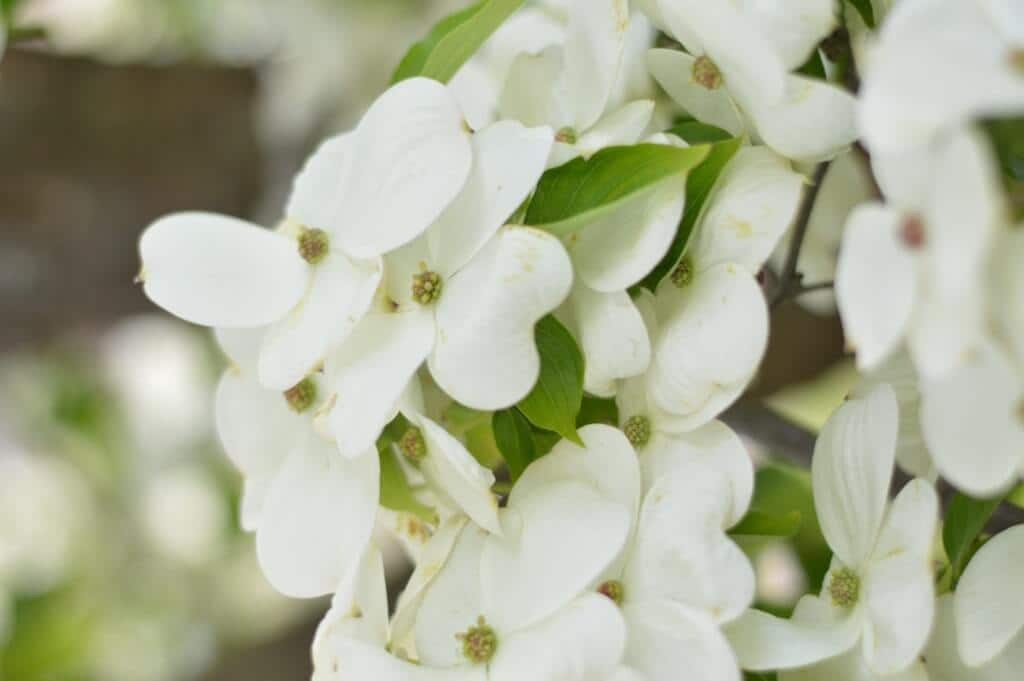 white flowers saturday