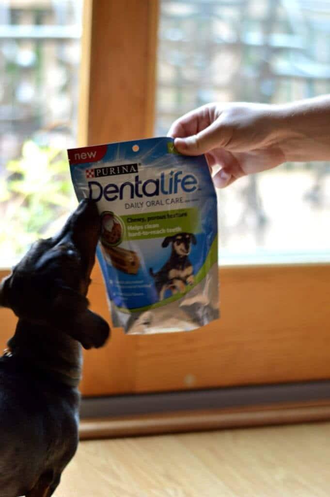 how to brush a stubborn dog's teeth DentaLife treats